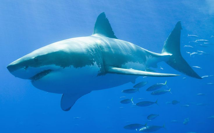 """The ultimate irony...saved by a giant wave! """"Surfer survived Great White Shark attack thanks to large wave - Telegraph  """"This was when a large wave came and I was able to paddle myself back to shore."""""""