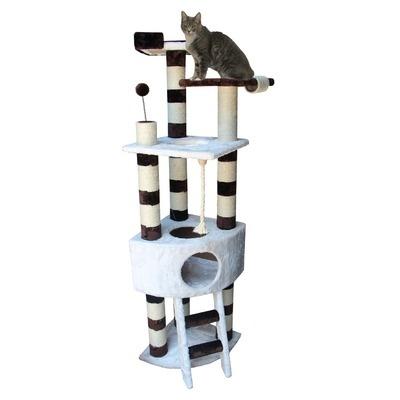 Where Can I Buy A Savannah Cat In Georgia