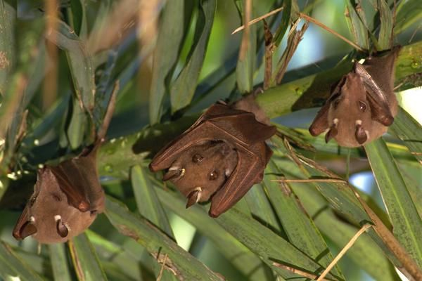 how to get rid of bats south africa