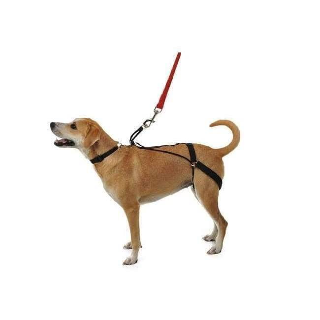This Works Great For My Dog She S A Houdini And Can Usually Get