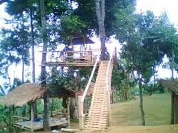 Rumah Pohon Nangorak