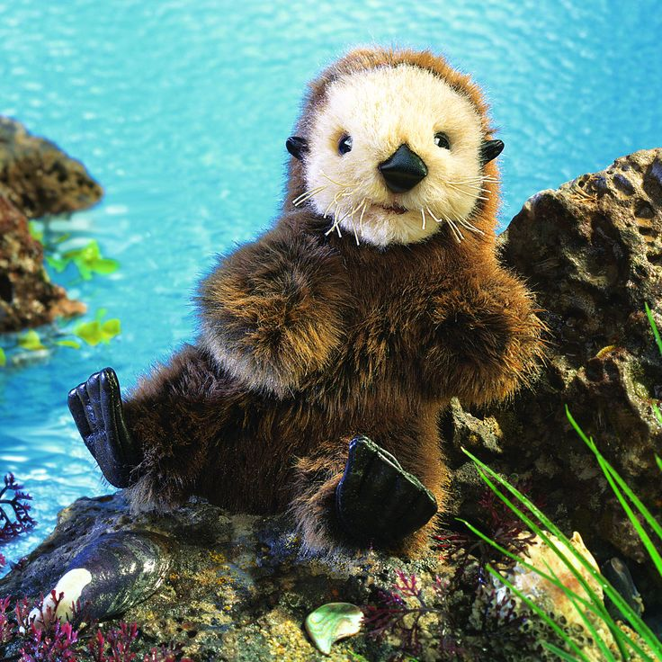 Nestled in your arms, the soulful eyes of this charming BABY SEA OTTER puppet…