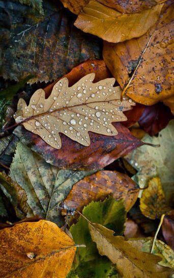 raindrops on autumn leaves