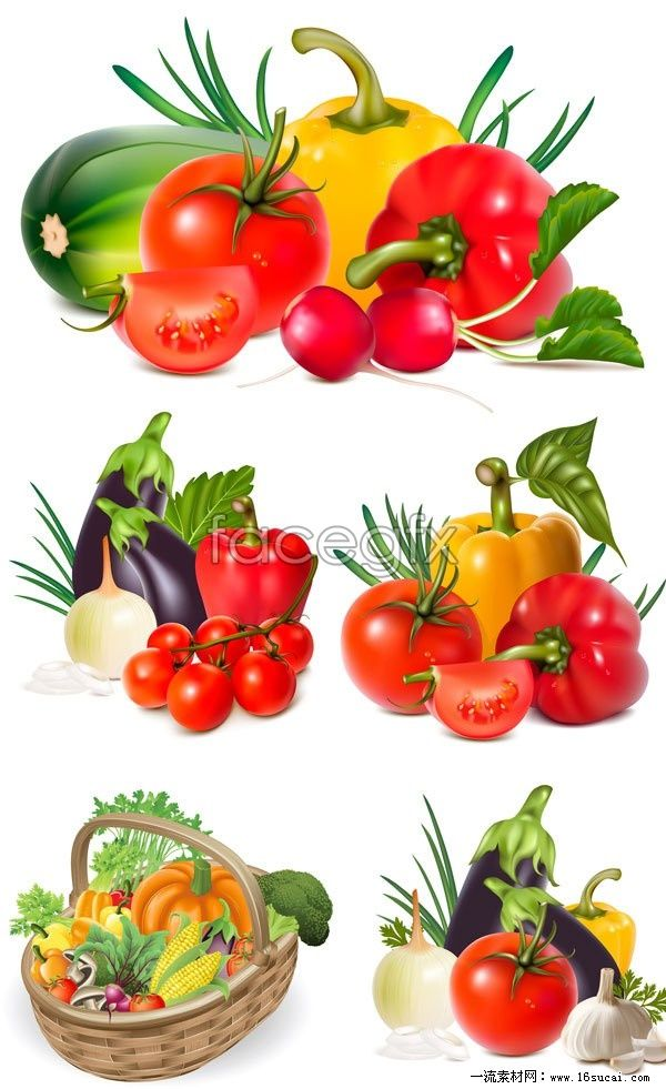 6 fresh vegetables vector map