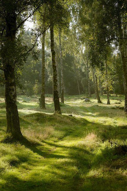 und der wald träumt ewig ……., nordvarg: Der letzte tag der sonne vor dem regen … – #tag #träume # ewig #wald #malmo