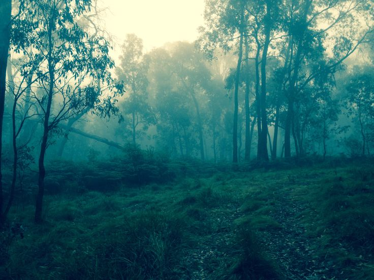 Wombat state forest in Victoria, Australia.  One of my favourite places at the moment for a weekend getaway.