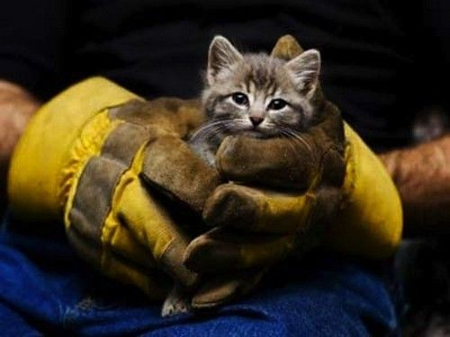 ((Fire fighter holding a rescued kitten)) Many people don't notice an injured animal, but then there are humans like these that  go as far as risking their lives to save them. I'm glad you exist. My thanks.