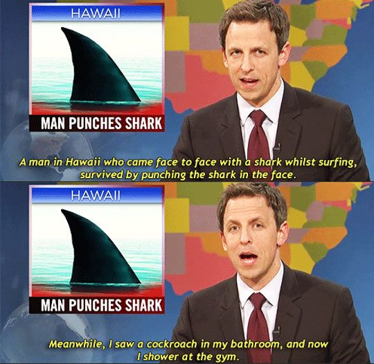 Man punches shark // funny pictures - funny photos - funny images - funny pics - funny quotes - #lol #humor #funnypictures
