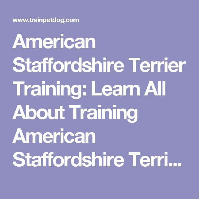 American Staffordshire Terrier Training: Learn All About Training American Staffordshire Terriers & Taking Care of Them