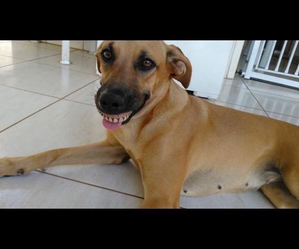 Articles sur les chiens: PHOTOS - Ce chien avec un dentier va vous faire mourir de rire ! - Frawsy