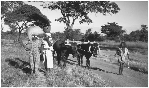 (Z)- Some typical things you may find in Zimbabwe are people working on farms, women cooking, and abundant amounts of food.