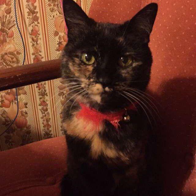 My kitty says hi #kittycat #cats #catsofinstagram by judyfruendt