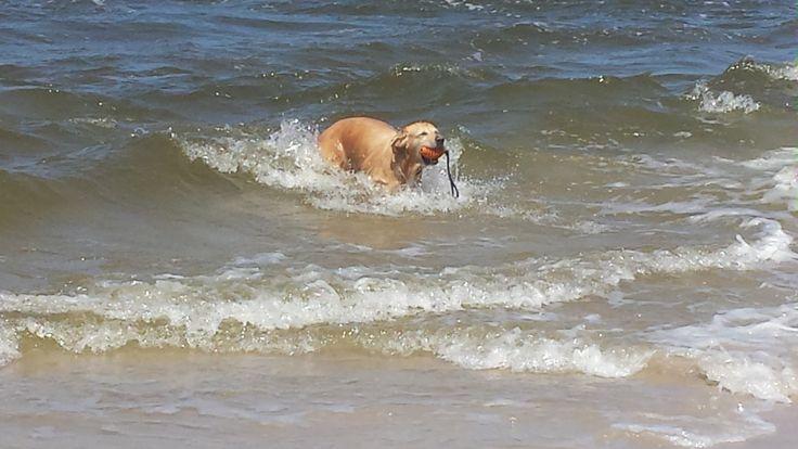 Hunde Foto: Yvonne und Kira - Verrückte Nudel liebt die Ostsee Hier Dein Bild hochladen: http://ichliebehunde.com/hund-des-tages  #hund #hunde #hundebild #hundebilder #dog #dogs #dogfun  #dogpic #dogpictures