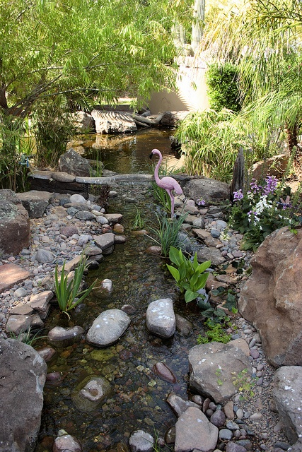 176 best images about backyard ponds on pinterest for Backyard pond animals