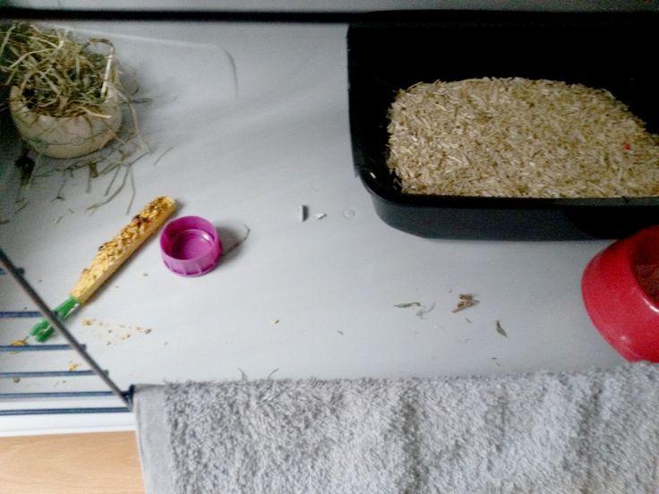 Intérieur de cage lapin : litière Animalis (environ 10e) avec chanvre, récipient en céramique Animalis (environ 5e) pour foin, bâton friandise, gros bouchon (jus Innocent) en guise de jouet, récipient pour eau, petite serviette sur la porte pour accéder à la cage