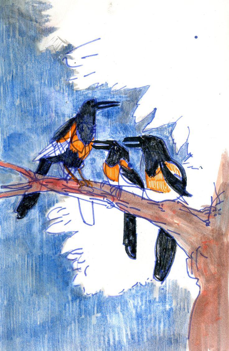 birds on a branch  #illustration #fun #cute #drawing #birds