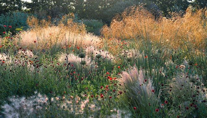 Textured wild garden.  This would look amazing in a large garden.  Easy to maintain and great impact. #bazaar #gardens