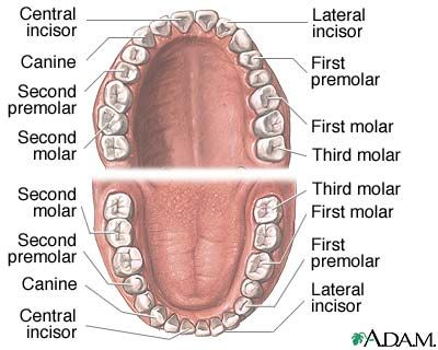 Dental anatomy--did you know the names?