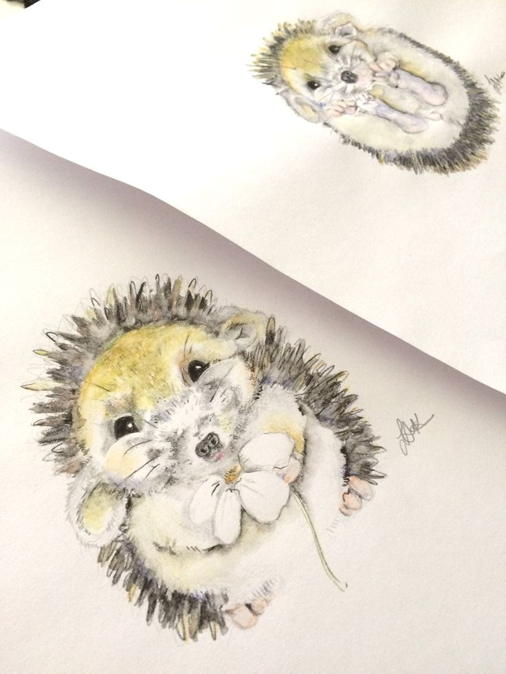 Hedgehogs watercolour drawing