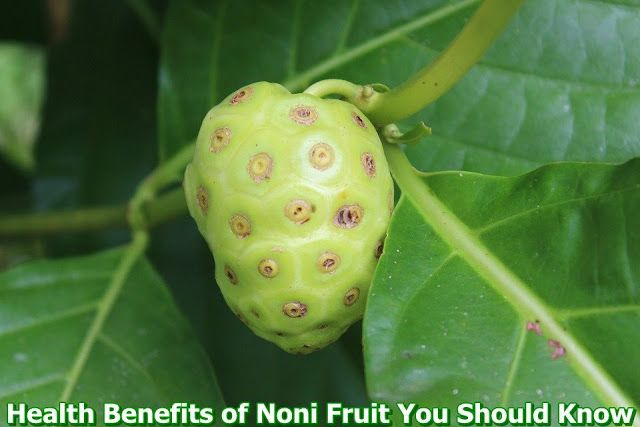 Nutrients and Compounds in Noni Fruit  Noni fruit has a variety of compounds such as alkaloids, polysaccharides, skobolitin, damnakanthal, flavonoids, Lignans, etc. It also contains vitamins A, C, iron, magnesium, potassium, selenium, zinc, copper and sulphur. Noni contains very useful alkaloids called Xeronine that improve the absorption of nutrients in the body. Noni also contains the xenonine 40 times more than it is found in pineapple. Below are the Health Benefits of Noni Fruit:  1…
