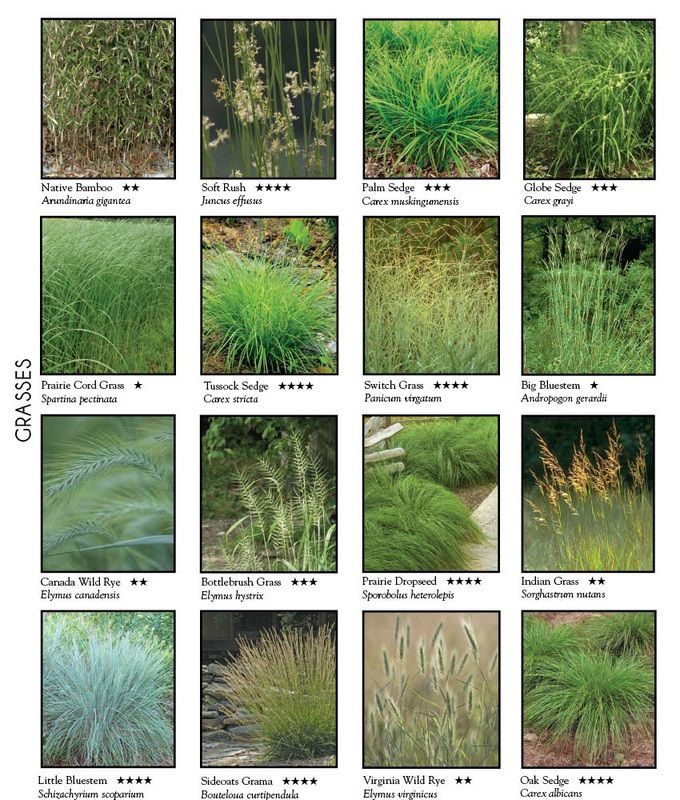 Ornamental Grass selection chart