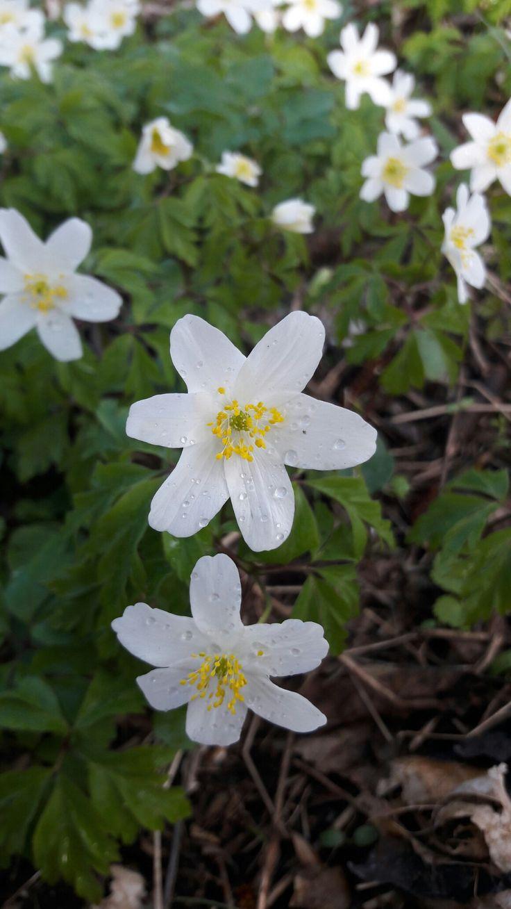 Spring flowers ❤