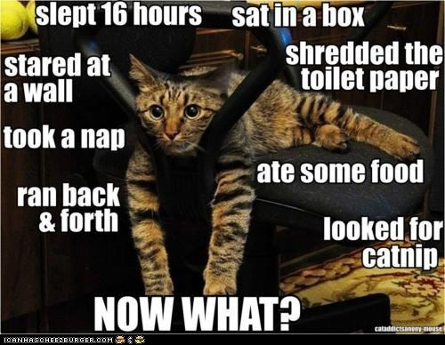 The daily quandary of a cat....