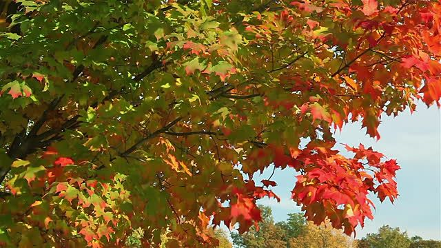Image result for green and red