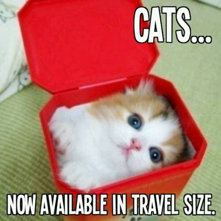Now available in travel size.
