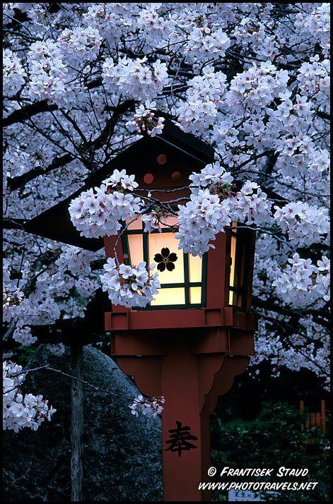 Hirano Shrine, Kyoto, Japan