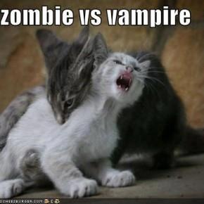 Vampire cat vs Zombie cat..... who will win??