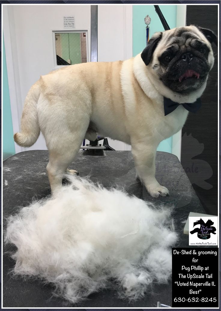 44 best creative color dog grooming images on pinterest all breed groomed at the upscale tail pet grooming salon naperville illinois solutioingenieria Choice Image