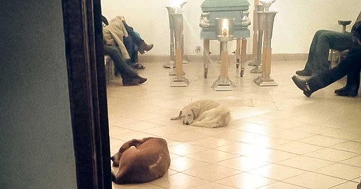 Αδέσποτοι σκύλοι εμφανίστηκαν στα ξαφνικά στην κηδεία της γυναίκας που τα τάϊζε