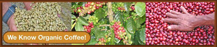 Jeremiahs Pick San Francisco Coffee Roaster | Retail coffee, wholesale coffee, fair trade coffee, organic coffee, decaf coffee, gourmet coffee beans San Francisco