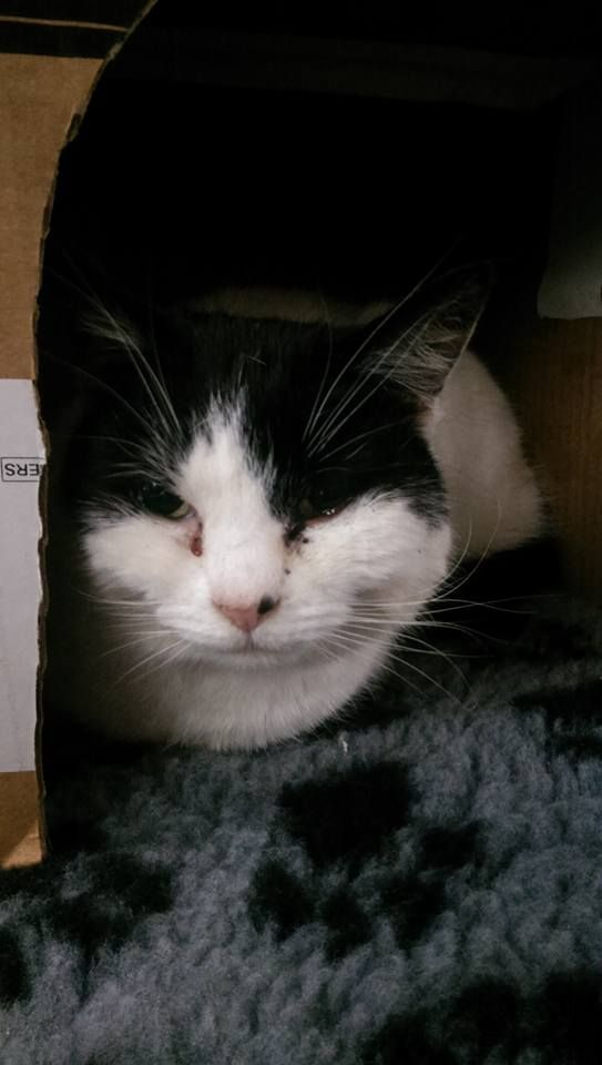 FOUND, Female cat found at Central Avenue Speke on. Been living in a shed for 12 months!!! Is chipped but details are out of date. RSCPA chip.Did you lose a black and white cat a year ago? Currently at Crawford Vets Mossley Hill.