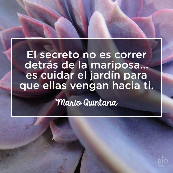 #Mario #Quintana #Frases #Quotes #Mariposas
