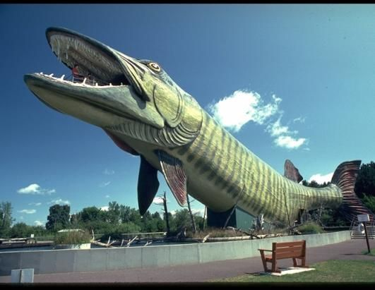 """The Fresh Water Fishing Hall of Fame & Museum in Hayward, Wis., is a great site for any fisherman, but the real highlight of this museum is the """"Shrine to the Anglers."""" The shrine sits inside the world's largest fish -- a fearsome muskie. It is more than four stories tall and as long as a Boeing 757. In the head, an observation platform offers up to 20 people at a time a view out over the whole complex. (Wisconsin Department of Tourism)"""