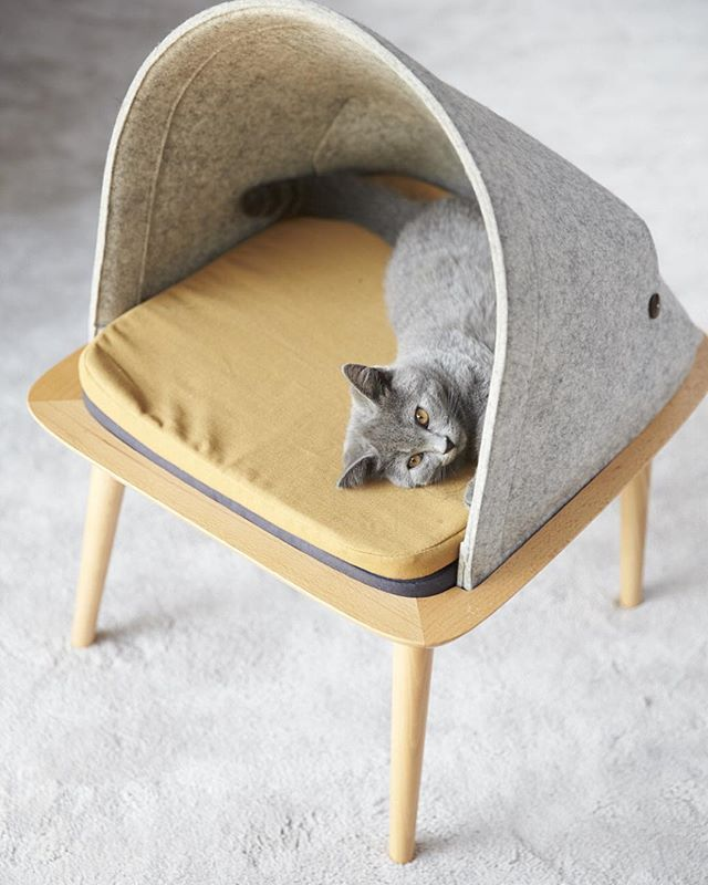Enjoying her bed #cat #cats #chat #chaton #cute #chartreux #beauty #catofinstagram #catoftheday #instacat #katze #kitty #kitten #kickstarter #kittens #kittycat #design #catbed #felt#scandinavian #meow #miaou #meyouparis#felt