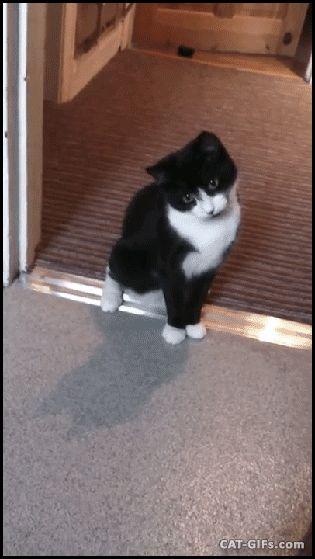 1000+ ideas about Kitten Gif on Pinterest | Cat gif, Gifs ...