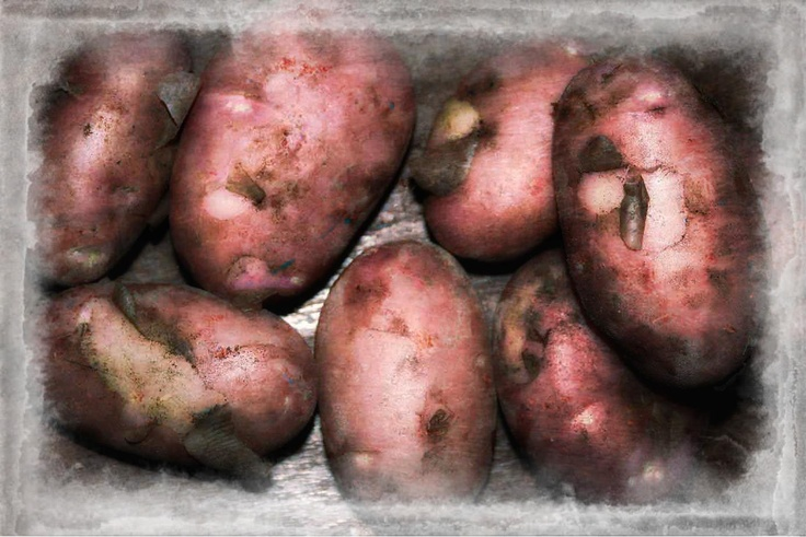 Potatoes of mine (Oh) ... by RCN
