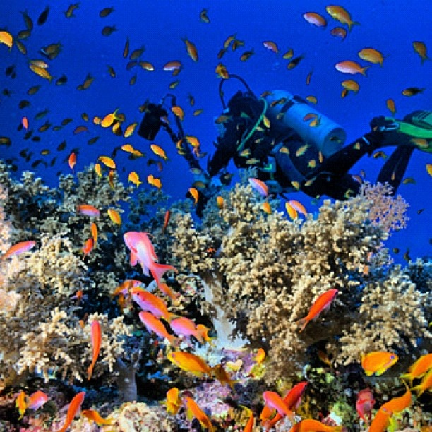 Colorful reef, Red Sea - @ocean_magazine #webstagram
