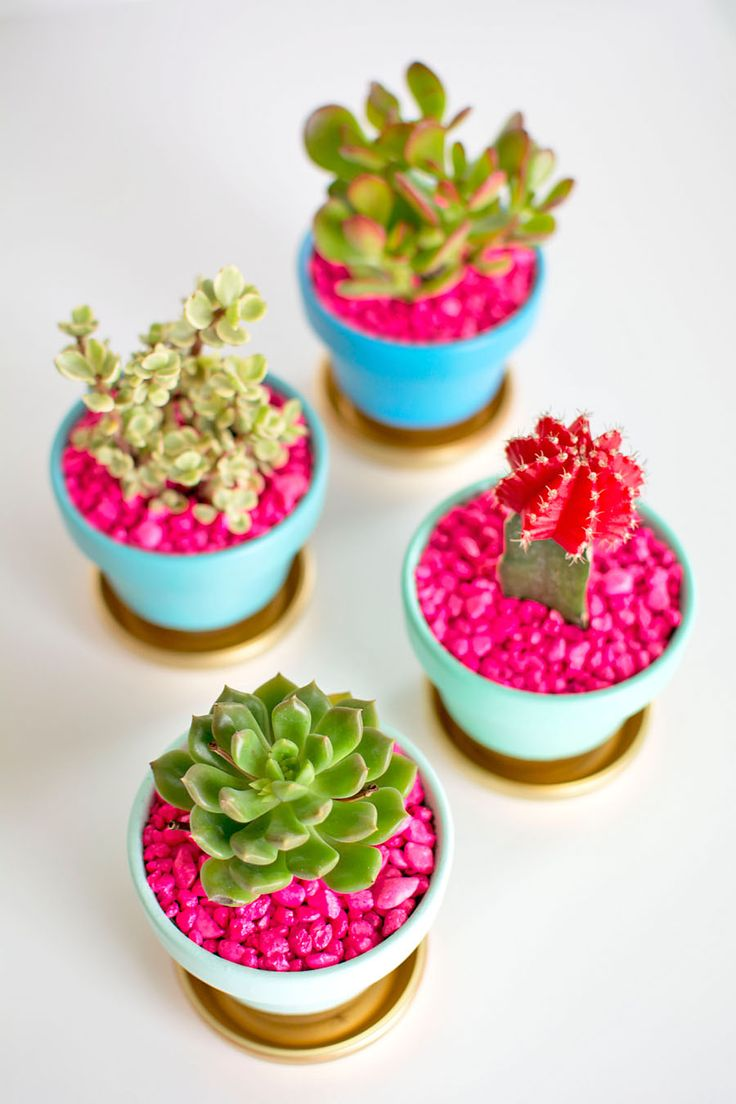 Succulents with Pink Rocks