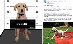 Dumfries and Galloway Police post joke appeal for DOG called Dudley | Daily Mail Online