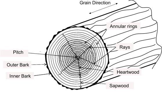 timber terminology