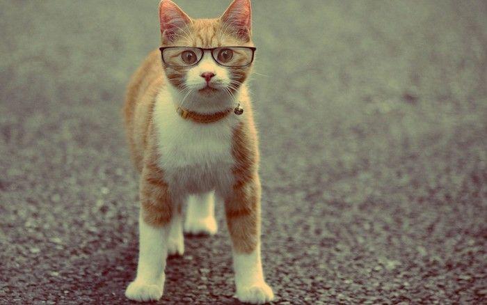 1001 Lustige Katzenbilder Und Katzenspruche Lustige Katzenbilder Susse Katzen Katzen