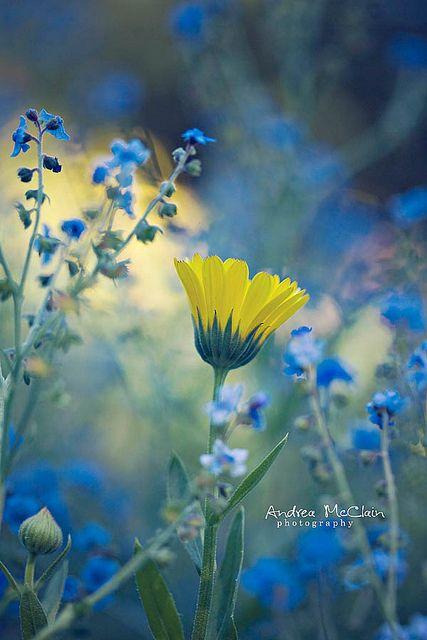 Sola... In un mare di azzurro, sola gialla incompresa. C'è un mondo meraviglioso attorno, nessuno come lei, nessuno che comprenda il suo trafiggente dolore. Tutti rinchiusi nel loro blu... Lei sola e gialla...MRM.