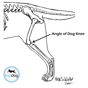 86 best images about acl tear in dogs  drake  ufe0f  on