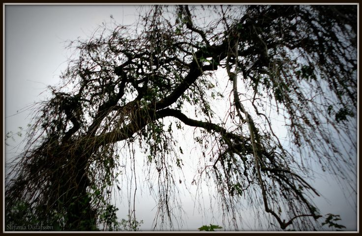 sad tree by MrsEfi on DeviantArt