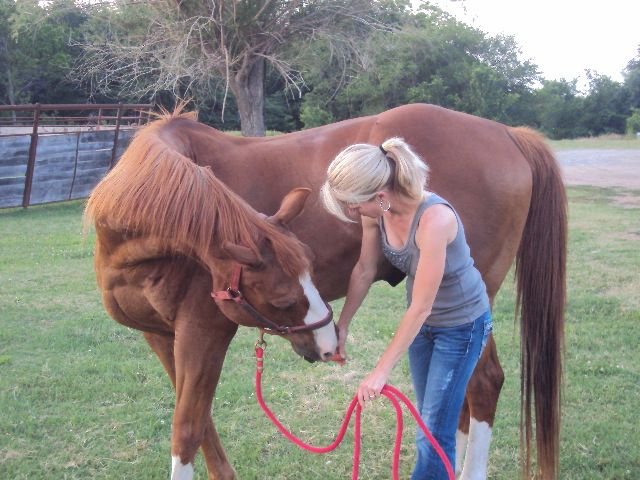 Horses can lean to do simple tricks - pets.answers.com