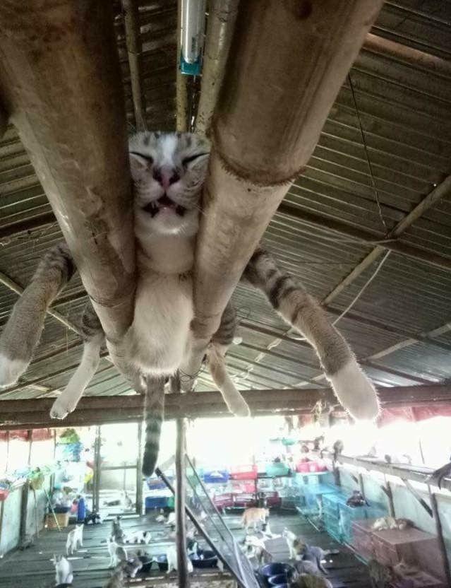 Funny cats - part 251 (40 pics + 10 gifs)